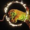 Цирки в Порецком
